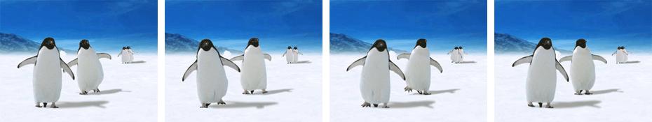 detail-ani-pinguins-4-images