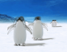 detail-supperpo-4-images-pinguins-225x175